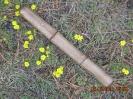 Дубовый бамбук_1